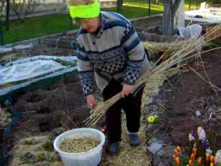 Делаем дорожки из тростника (камыша) . 1 часть.Garden.Советы огородникам.