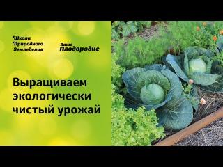 Выращиваем экологически чистый урожай. Защита растений