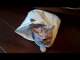 Cat&package_1