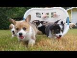 Корзина со щенками