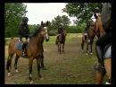 Все о лошадях. Самюр - столица верховой езды