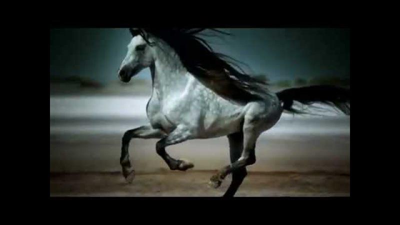 ҉ Видео про лошадей (Песня из рекламы Bon Aqua)