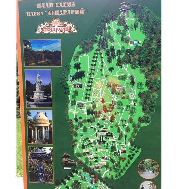 План-схема дендрария в Сочи.
