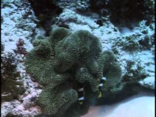 Подводная одиссея команды Кусто: 3 Коралловые джунгли
