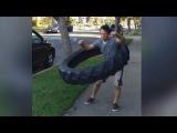 Самые смешные видео | Подборка приколов