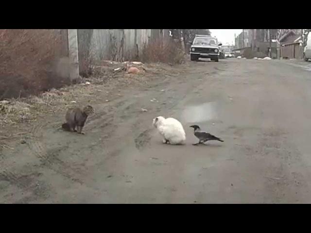 Два кота и наглая ворона