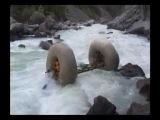 Altai mountains, Argut (Karaghem break rapid), August 2003. S. Lagoda, A. Provatorov