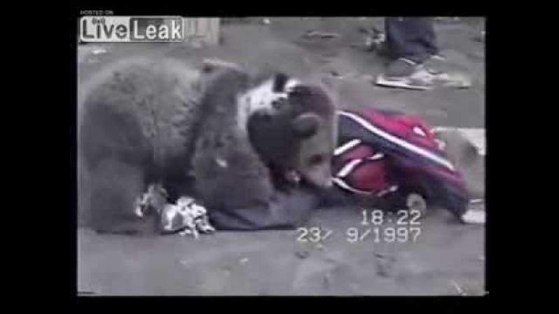 Молодой Хабиб Нурмагомедов борется с медвежонком 1997 год