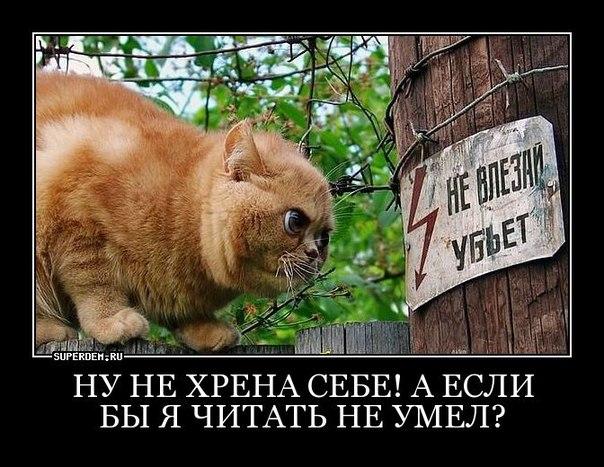 Часть средств, сэкономленных в результате списания долга, пойдет на повышение соцстандартов, - Яценюк - Цензор.НЕТ 2034