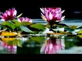 ♡ Just For You - Ernesto CORTAZAR (romantic piano music)