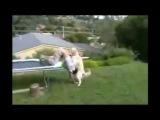 Мужик падает с трамплина, а потом его голову трахает собака