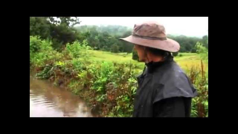 Пермакультура - ЛУЧШЕЕ ВИДЕО - теория и практика