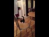 Funny cat walk