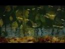 Осенние листья - Richard Clayderman - Autumn Leaves