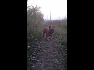 трюфель-противный пёс