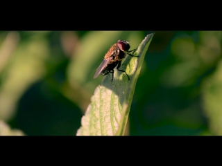Nature | DSLR Film (Nikon D5100 video test)