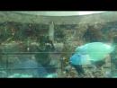 OceanPLAZA чудо-рыбки 4 мая 2015