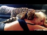 Кошка Ашера, за которую просят от 15 до 100 тысяч долларов.