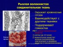 Собственно соединительные ткани 1 РВСТ