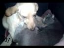 Собака и кошка в будке вместе лежат и кормят котят и щенков / Cat and dog in the same niche with their babies
