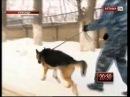 В Караганде служебный пёс по кличке Винс помог найти вора укравшего из Храма деньги