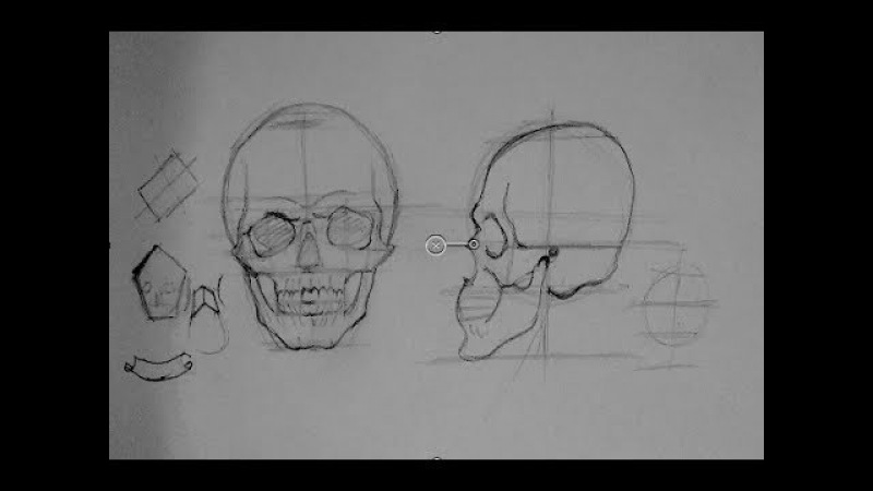 Drawing Human Anatomy Head Proportions | How to Draw a Reaslistic Skull Step by Step