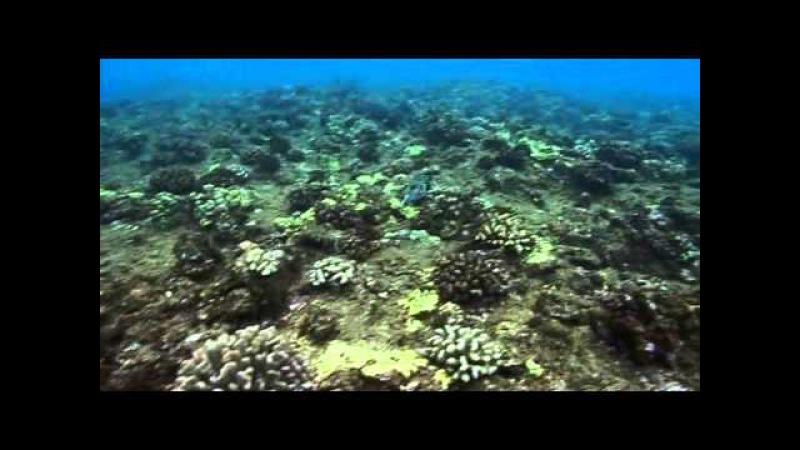 Выжить любой ценой 1 сезон 9 серия (9) Необитаемый остров