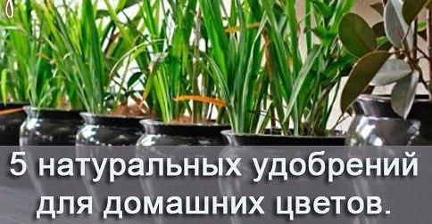 Как в майнкрафте сделать удобрение для растений 184
