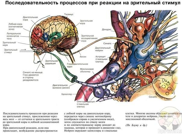 Медицинские учебники по всем