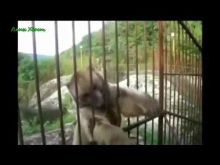 СМЕШНЫЕ ПРИКОЛЫ С ЖИВОТНЫМИ ПОДБОРКА СМЕХ ДО СЛЁЗ. Приколы с Кошками. Fun with Animals
