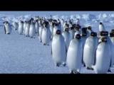 Vangelis - Theme from Antarctica