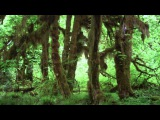 Wilderness Rainshower 11 Hours -Sounds of Nature 27 of 59 - Pure Nature Sounds