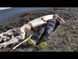 Giant Squid With 16 Feet Long Tentacles - New Zealand Beach