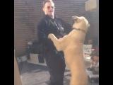 """""""Havin fun with Pasha! #kangal #dog"""""""
