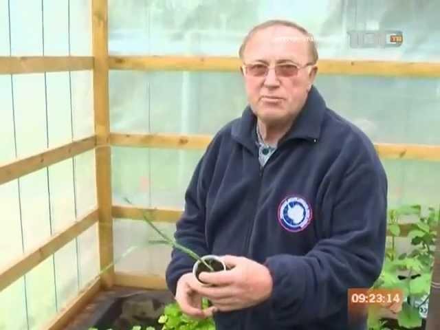 Владимир Сильнов о винограде 2013 ТВ100