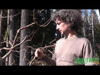 Побелка деревьев весной и осенью