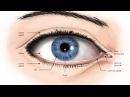 Техники остеопатии на глазах улучшение зрения дальнозоркость и близорукость глаукома катаракта