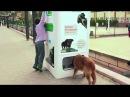 Автоматы Для Кормежки Бродячих Собак в Стамбуле