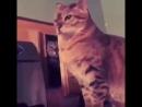 Кот бьёт исподтишка