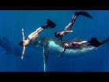 GoPro Whale Fantasia
