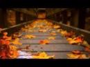 Невероятно красивая музыка - Легран Саксофон-Michel Legrand Музыка