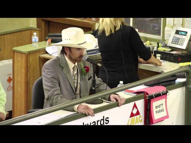 Livestock Cattlerap Sessions 2014 Rhett Parks Животноводство Сеансы 2014