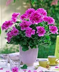 Купить комнатные цветы дешево в екатеринбурге