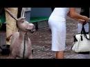 Приколы с животными 2015 часть 120 III Самые Смешные Приколы с Животными III