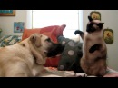 Cat boxing dog Who wins