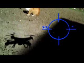 Охота на кота с квадрокоптером