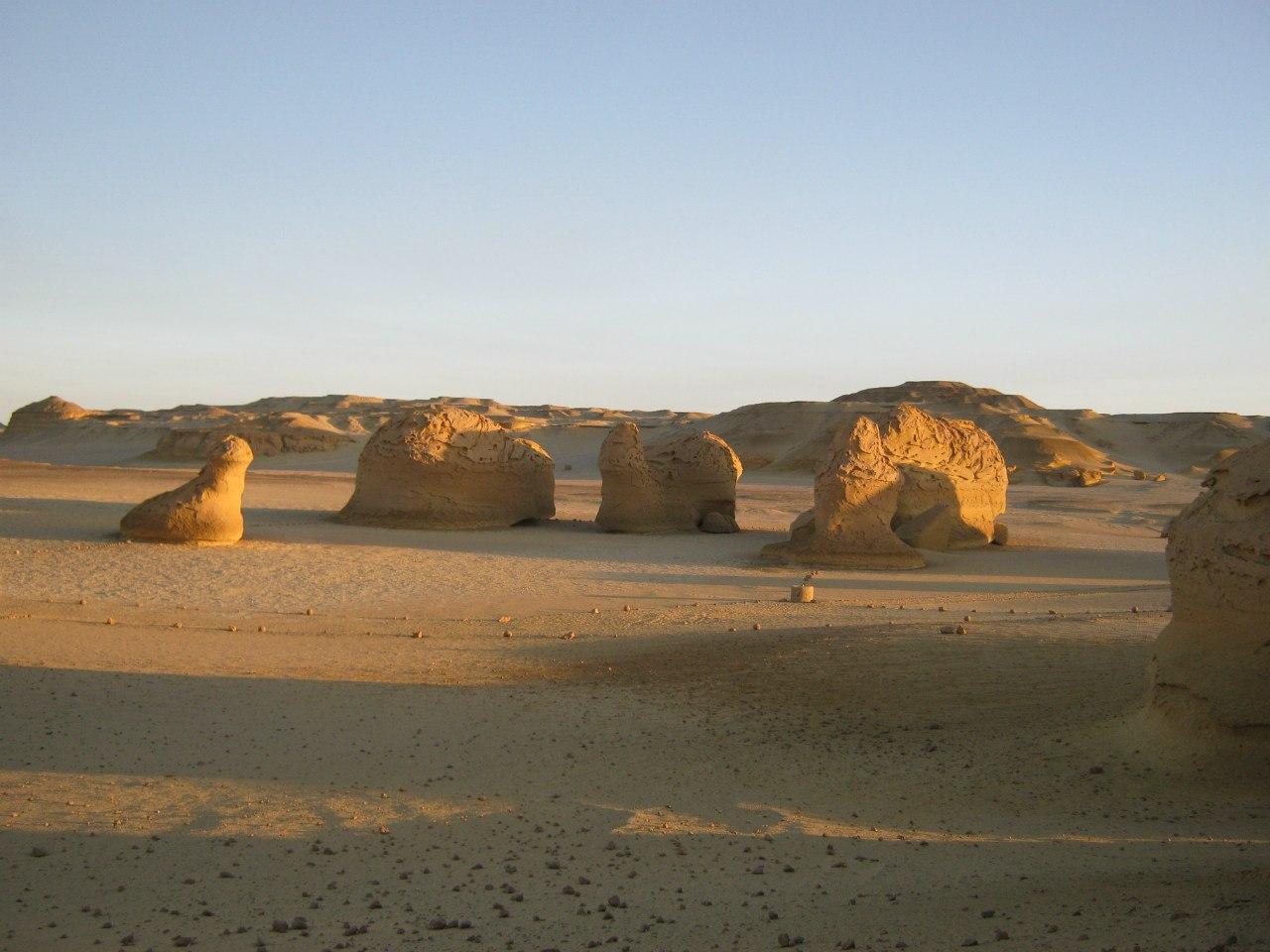 камни кажутся окаменевшими животными