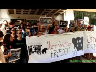 თბილისი ზოოპარკის გარეშე We Don'T Want a Zoo (Tbilisi Vegan)