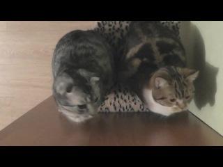Hypno-Cats
