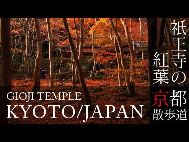 京都観光 祇王寺の紅葉(Autumn leaves of Giouji temple in Kyoto,Japan)BGMで日本旅行 / そうだ京都行こう / 京3711